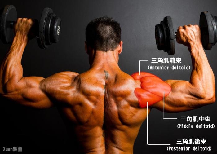 Xuan瘋運動教室/盔甲線/三角肌訓練/肩膀訓練/