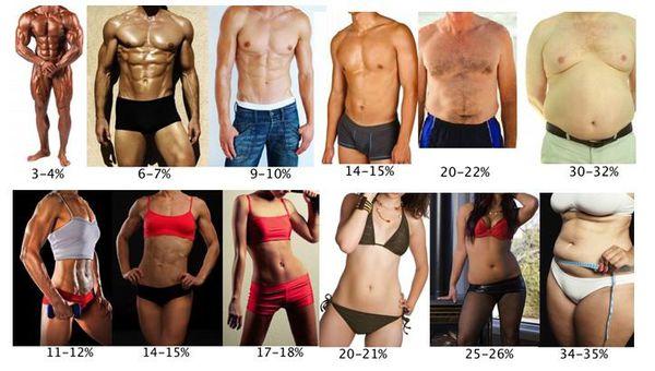 腹肌體脂表